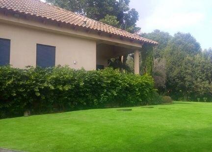 דשא סיננטי בגינה