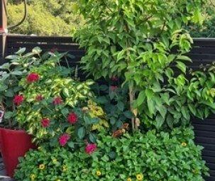 גינת גג עם צמחייה