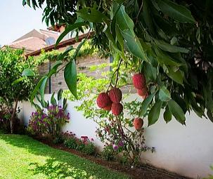 עיצוב והקמה של גינה בבית פרטי