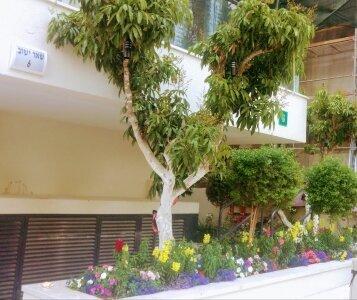 עץ בגינה ברמת גן