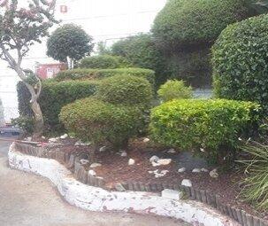 שיחים מעוצבים בגינה פרטית