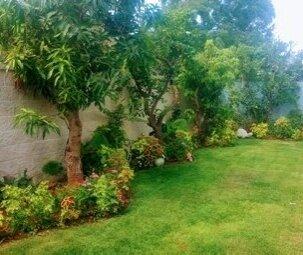 שתילת עצים בגינה